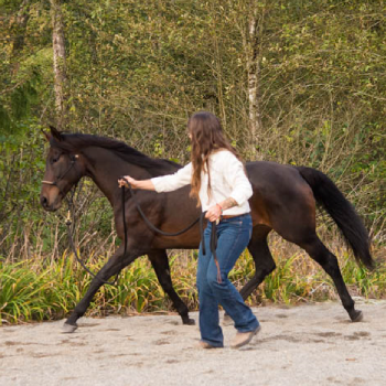Hoofbeat Attunement Training